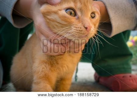 close shot of a red kitty and child holding cat's head in small palms trying to catch and hold