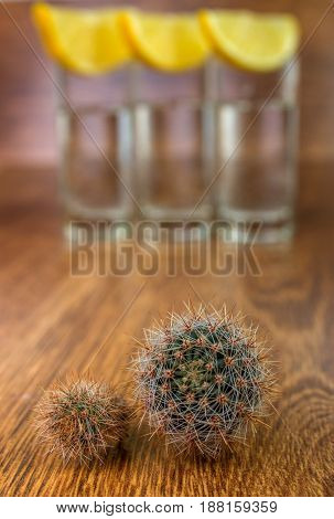 Two Small Cactus With Tequila