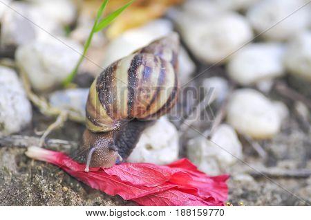 A snail 's eating a flower , a snail