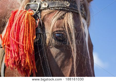 close-up detailed portrait of a horse with chestnut hair mane with blue sky as background