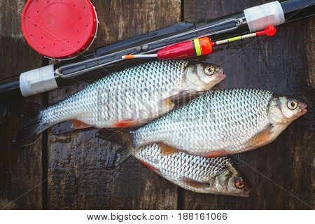 Catch from fresh river fish a can of bait and a float rod. On a wooden background