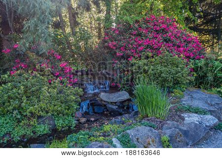 A view of a garden stream with flowers.