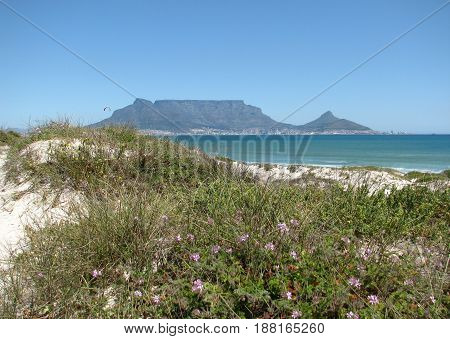 FROM BLOUBERG STRAND, CAPE TOWN, SOUTH AFRICA, WITH VEGETATION IN FORE GROUND AND TABLE MOUNTAIN IN THE BACK GROUND 22xog
