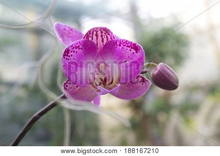 Colorful orchid flower in the summer garden