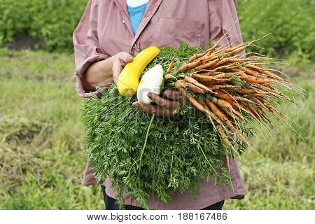 Harvest. Woman holding a harvest of vegetables: carrots zucchini and squash. The woman is dressed in dirty clothes she is dirty from working in the garden with his hands.