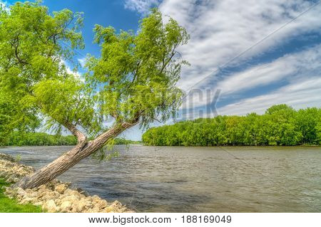 Willow tree overlooking bank of Mississippi River in Red Wing Minnesota.