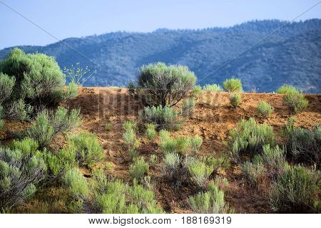 Sagebrush plants with mountains beyond taken in the Great Basin Desert
