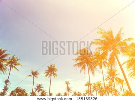 coconut trees over clear sky on day with sun light retro effect image