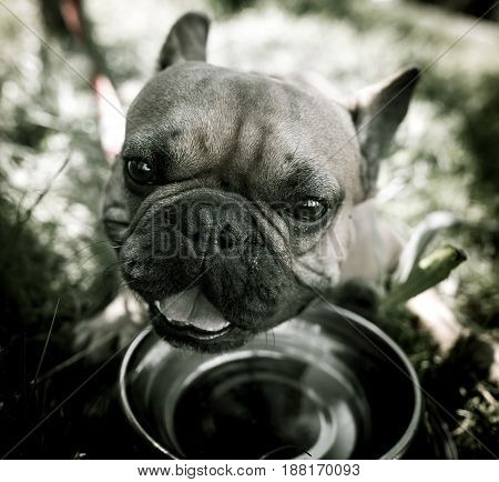 Dog drinking water from a bowl outdoors .