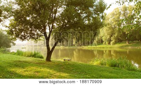 Summer bright sunny day on the river bank next to a bench a tree green grass and bushes. A yellow day landscape