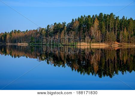 Forest reflection calm lake water, the morning light
