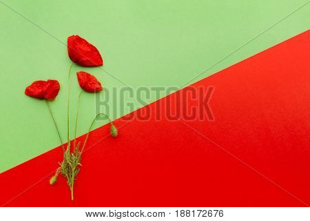 Poppy flower on red and green oblique background