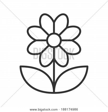 Camomile linear icon. Thin line illustration. Flower contour symbol. Vector isolated outline drawing