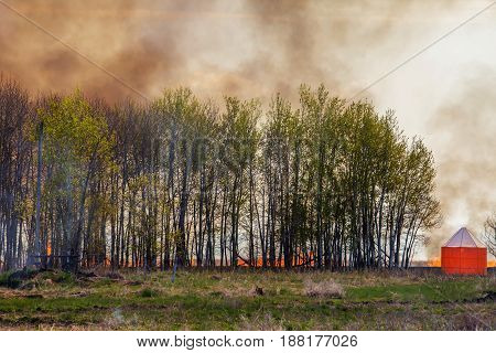 A wall of fire behind a forest of green leaf trees in a prairie agricultural landscape