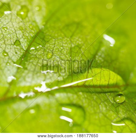 Green leaf on a plant in nature. macro