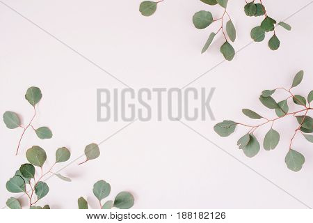 Beautiful eucalyptus branches frame on pale pastel pink background. Flat lay top view. Lifestyle composition.