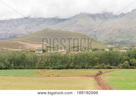 A farm landscape near Matjiesrivier with the Swartberg covered in clouds in the back