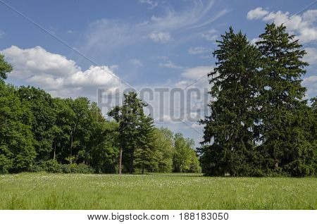 View in the park on trees meadow with flowering herbs and a beautiful blue sky with white clouds