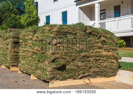Horizontal closeup photo of green and brown sod on wooden pallets with partial white house and trees in the background