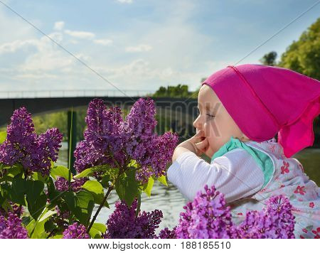 little cute baby in a kerchief looks at the bush of a blossoming lilac