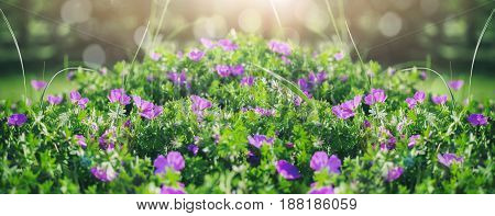 Beautiful violet bells flowers greens and bokeh lighting in the garden summer outdoor floral nature background. Spring and summer landscape