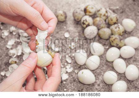 Peeling Off Quail Eggs