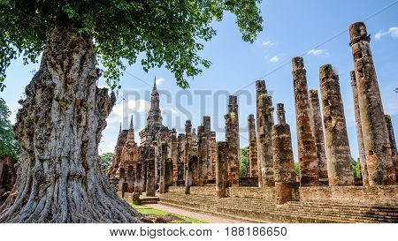 Ancient pagoda near a large tree in the ruins under the sky at Wat Maha That temple in Sukhothai Historical Park famous tourist attraction of Sukhothai Province Thailand 16:9 wide screen