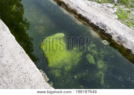 Green water algae and moss paintings in the pool,