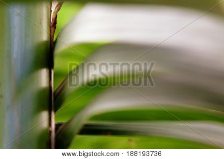 Abstract green background with a blur effect and space for text. Image design looks like flowing leaves.