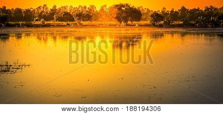 Landscapes of Shallow lakes and trees with the sun set