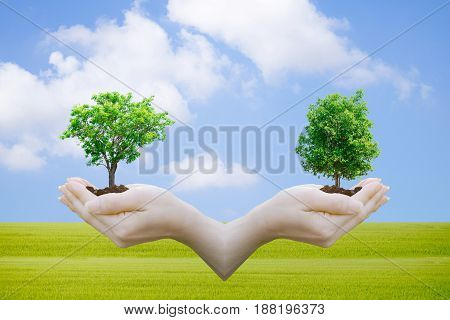 Ecology concept Human hands holding big plant with on blurred World Environment Day