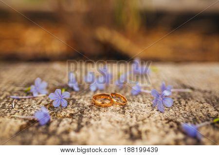 Wedding rings on flowers. Wedding in Montenegro