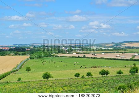 A View To Fields And Herds Of Cows And Sheep Grazing On A Farmland Near Old Sarum, Salisbury, Englan
