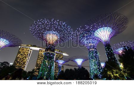 Supertree Grove At Night In Singapore