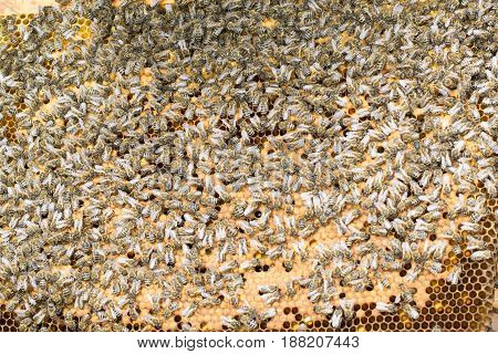 Photo of bees on honeycomb in apiary