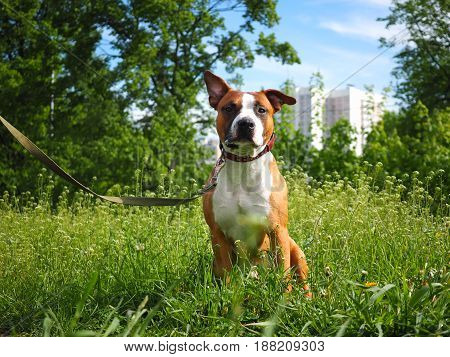 Dog sitting in beautiful green grass. Blue sky background in city