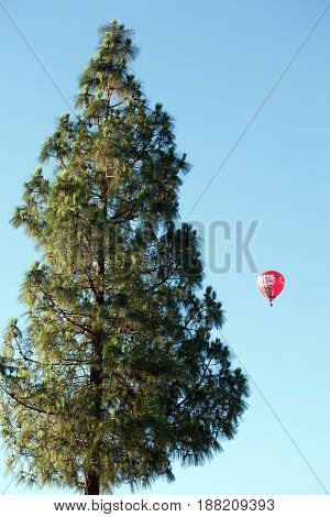 PHOENIX AZ USA - May 23 2017: Tall pine in a flight path of observation hot air balloon in a pristine blue sky of early morning in Phoenix Arizona