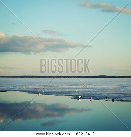 Ducks and seagulls on the melting ice of Lekischmosero lake. Aged photo. Sunny day. Wild nature of Russian North. Late spring in Kenozersky National Park (UNESCO Biosphere Reserve) Russia.