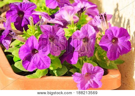 Magenta decorative flowers in a brown pot