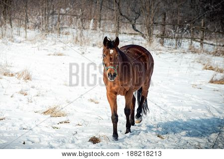 Horse on the snow during a exercise