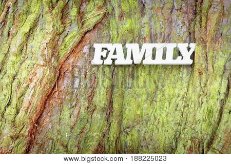 White family sign on old tree trunk texture. Family tree concept