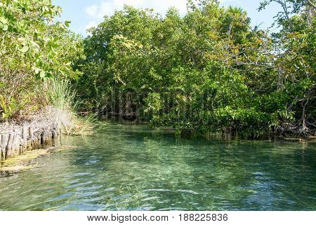 The lagoon of Ojo at Holbox island Mexico