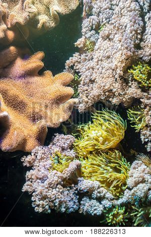 Tropical Water Plants Coral Anemone Colorful Flora Sea