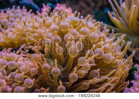 Tropical Water Plants Orange Bubbled Leafs Coral Anemone