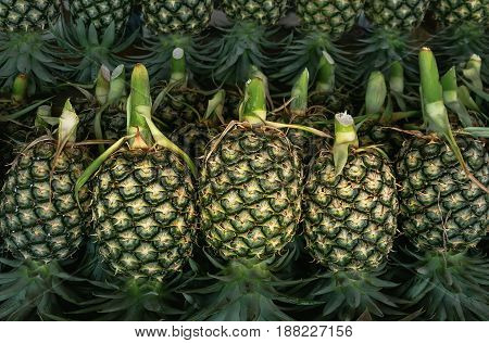 Green pineapples for sale on market in Thailand