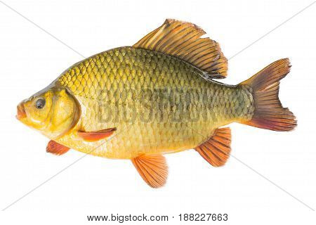 Golden fish on a white background. isolated.