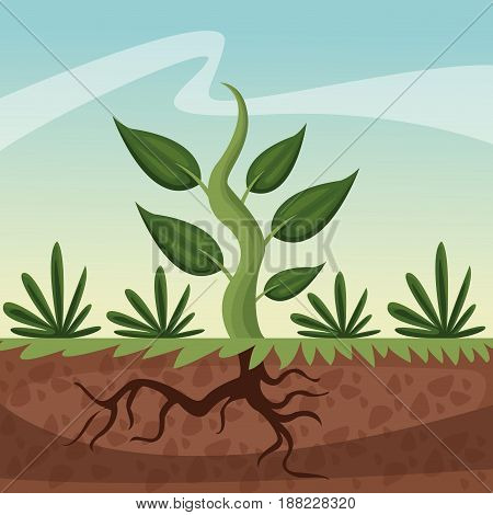 realistic color poster closeup growing plant vector illustration