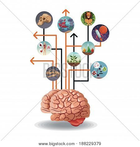 color circular icons with picture world evolution inside connected to brain vector illustration