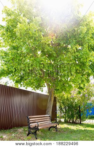 A beautiful big maple with green foliage near which is a bench. Yard