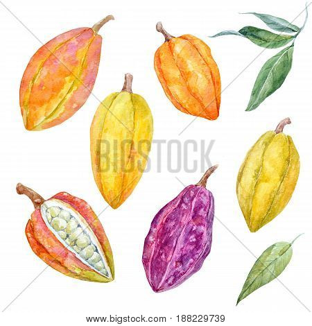 Beautiful set with watercolor hand drawn cacao fruits